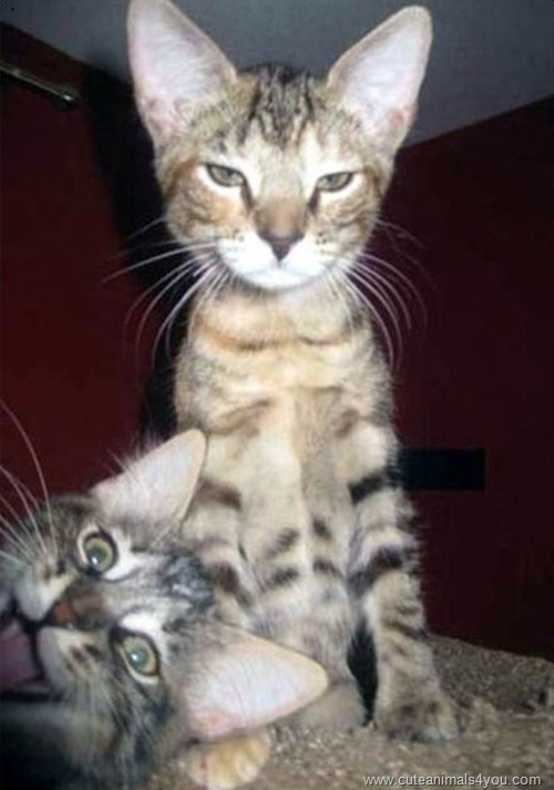 50_Funniest_Animal_Photobombs_Of_All_Time_41