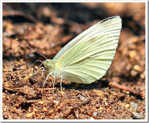 ButterflyIMG_3434 (2)