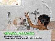 curso de comportamiento en la peluqueria canina