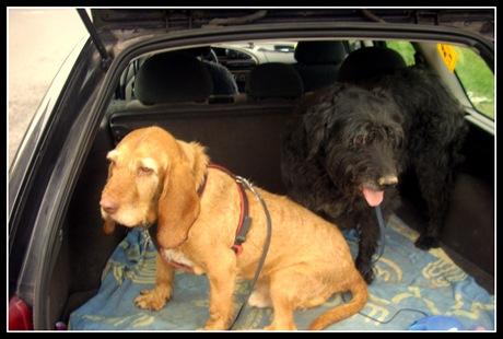 Pipo und Baghira 2012 037