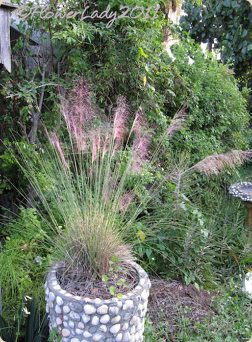 10-22-pink-muhly-grass