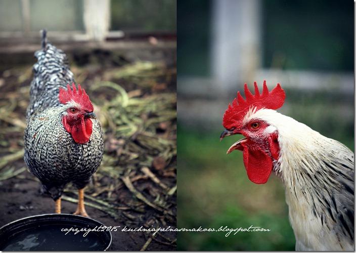 Ptaki mojej mamy8