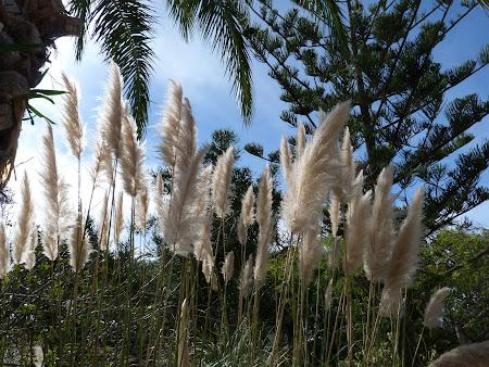 11. gradina botanica Porto Santo.JPG