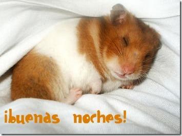 hamster grande imagen (1)