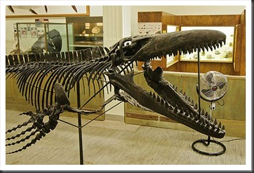 2011Aug1_Museum_of_Geology-1