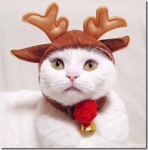 gatos gorro papá noel (4)