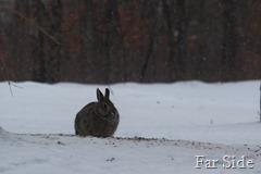 Bunny Jan 17