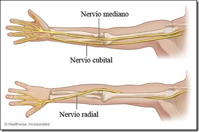 Nervio radial - Complementarios