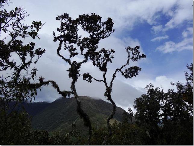 Machu_Picchu_DSC02181