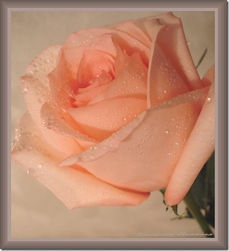 para san valentin rosas y flores (9)