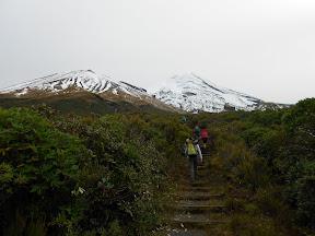 Stairs leading towards Upper Lake Dive Track & Fanthams Peak