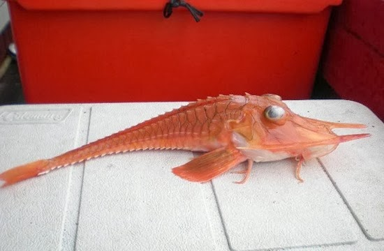 Peixe da Malásia 03