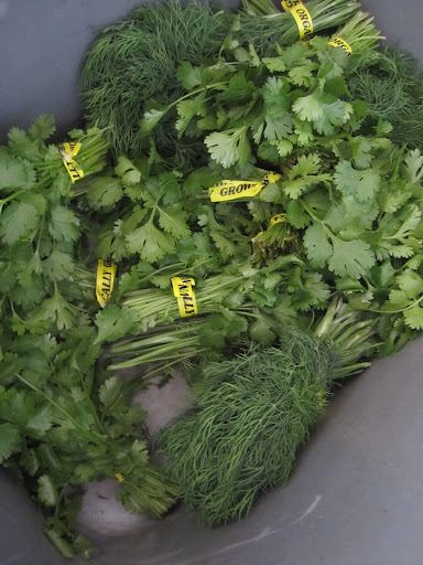 A selection of cilantro and dill