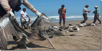 Tragedia marina en Perú 01