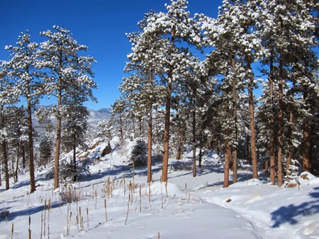 Mount Falcon Park February