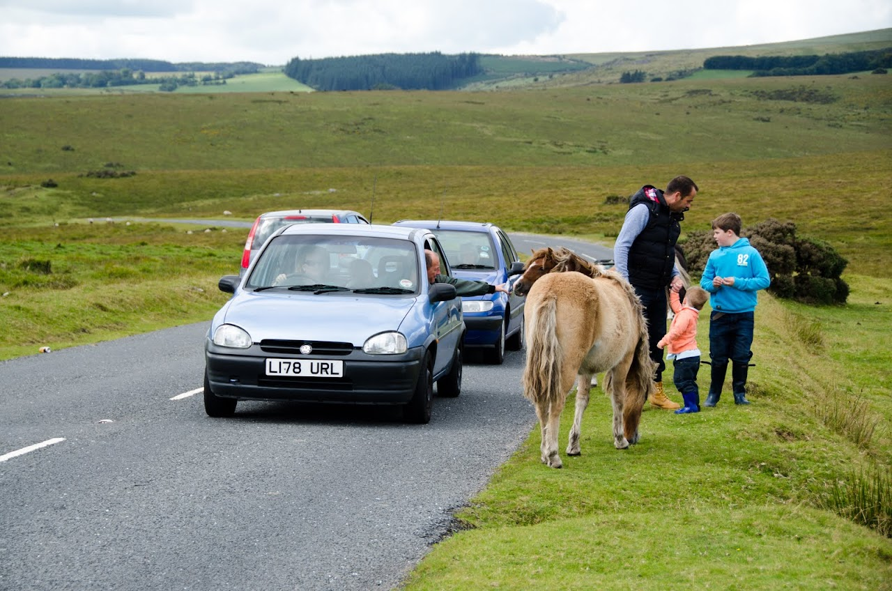 Children petting Dartmoor pony