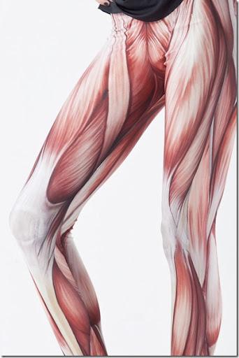 Muscles-Leggings-Pants