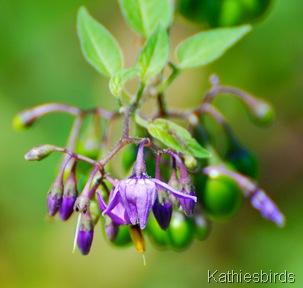 4. flower-kab