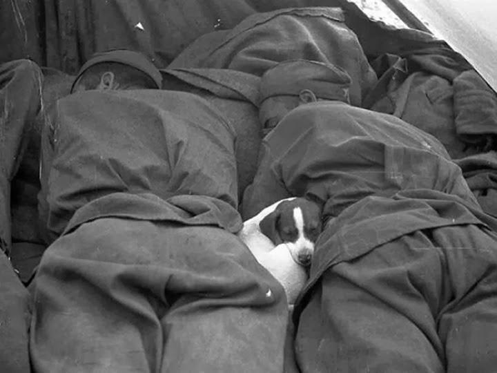 Russ-pup