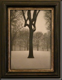 Jefferson_Hayman_Tree_Central_Park