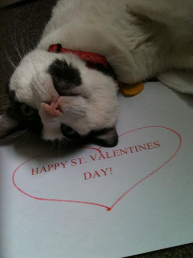 Kitties can make Valentine's too!