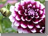 clip_image02752
