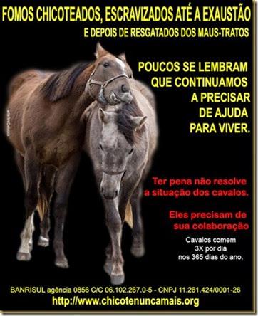 cavalos_esquecidos_thumb[1]