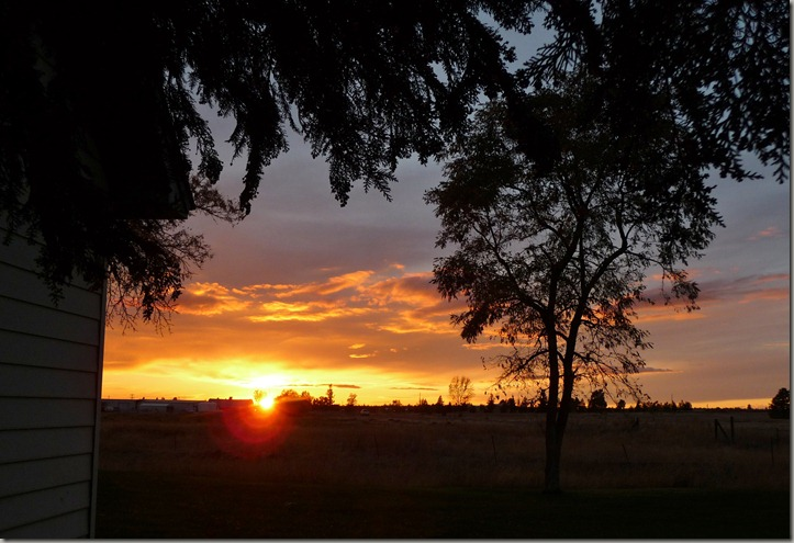 sunsets 010