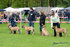 20100513-Bullmastiff-Clubmatch_30844.jpg