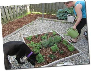Krissy's herb garden.