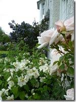 linda's garden