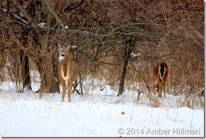 deer6copy