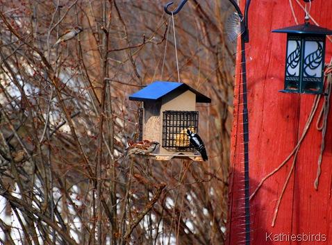 10. yard birds-kab