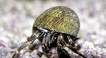 Polynésie bernard l'ermite