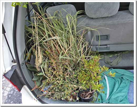 120411_plants_in_car
