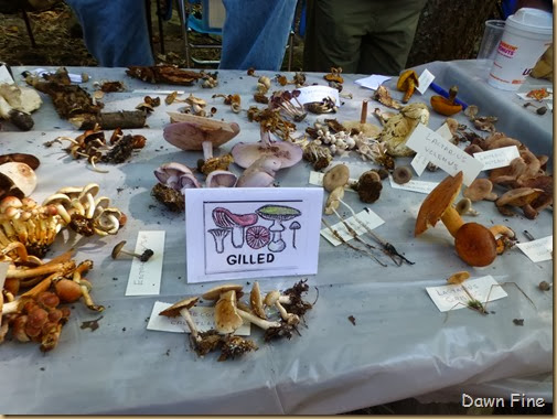 Mushroom festival_043