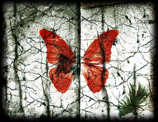 mariposa_roja