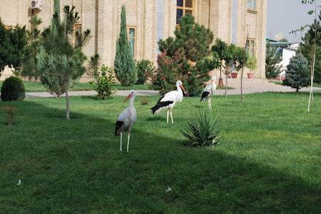 Obiective turistice Uzbekistan: Tashkent - Khast Imom cu berze