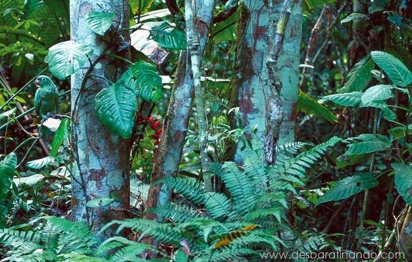 camuflagem-invisivel-animal-camouflage-photography-art-wolfe-desbaratinando (8)