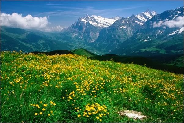 وادي من اودية جبال الالب في بيرن - سويسرا