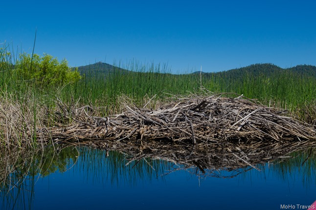 several beaver dams along the way