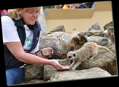 Pam White feeding Meerkat (resized) DSC_0183