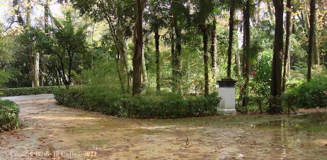 Parque de María Luisa  - novbre 20011 - Gta. Juanita Reina (19).jpg