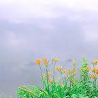 angkorsite_flower_1 (109).jpg