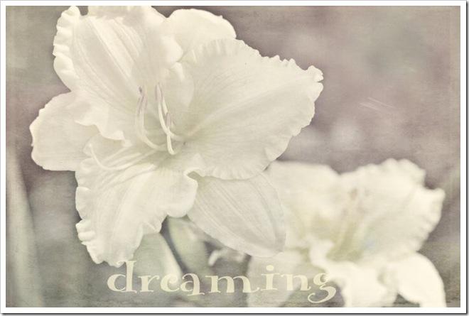 dreaming-sz 016