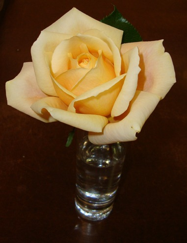 rose pic