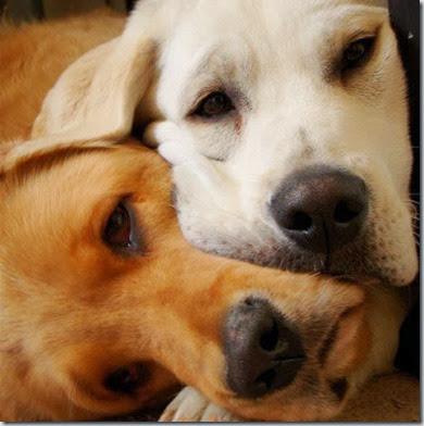 domande frequenti in riproduzione canina