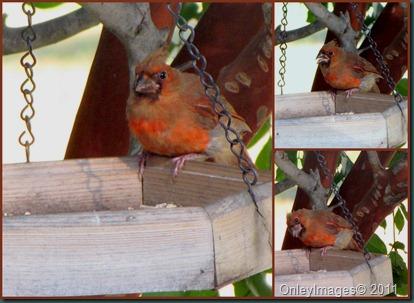 cardinal collage0825