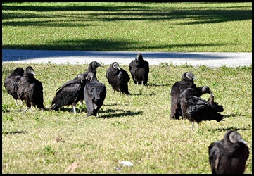 02 - Vulture Greeting Committee