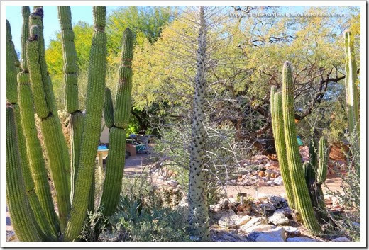 131203_TucsonBotanicalGarden_093